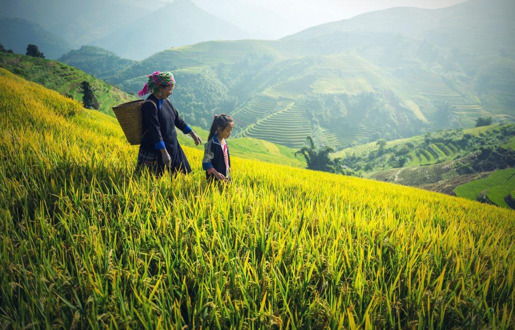 Eine Mutter mit ihrem Kind geht am Hang eines Reisfeldes entlang.