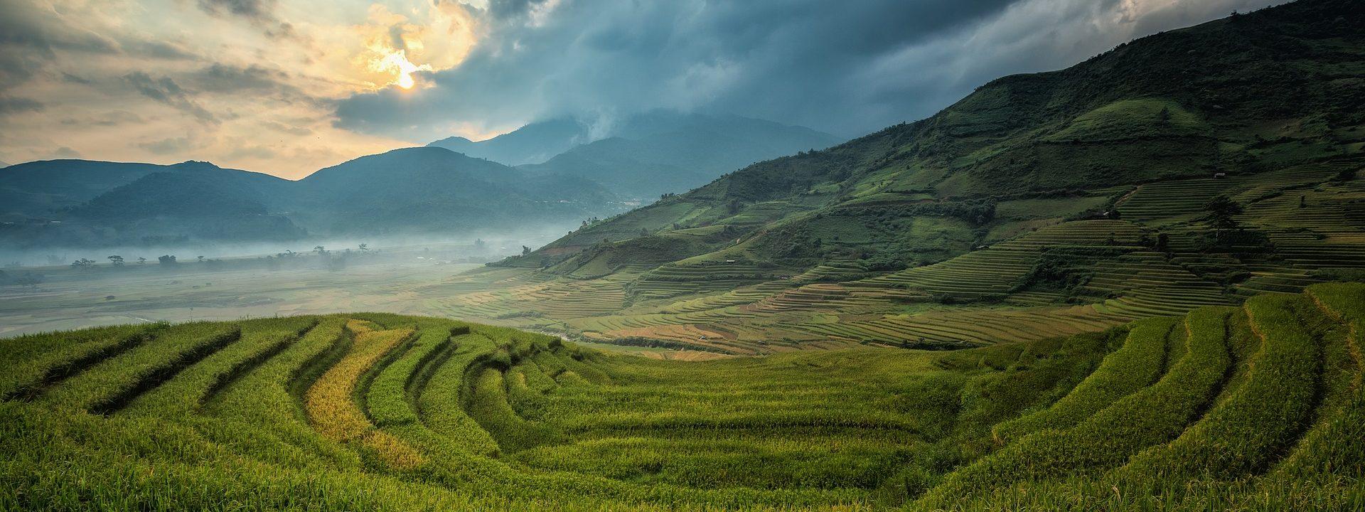 Felder in Asien
