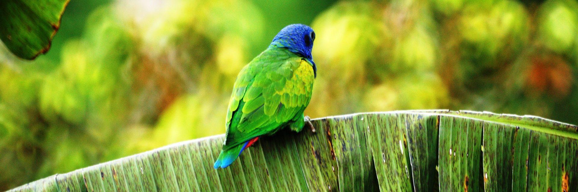 ein Papagei auf einem Bambusblatt
