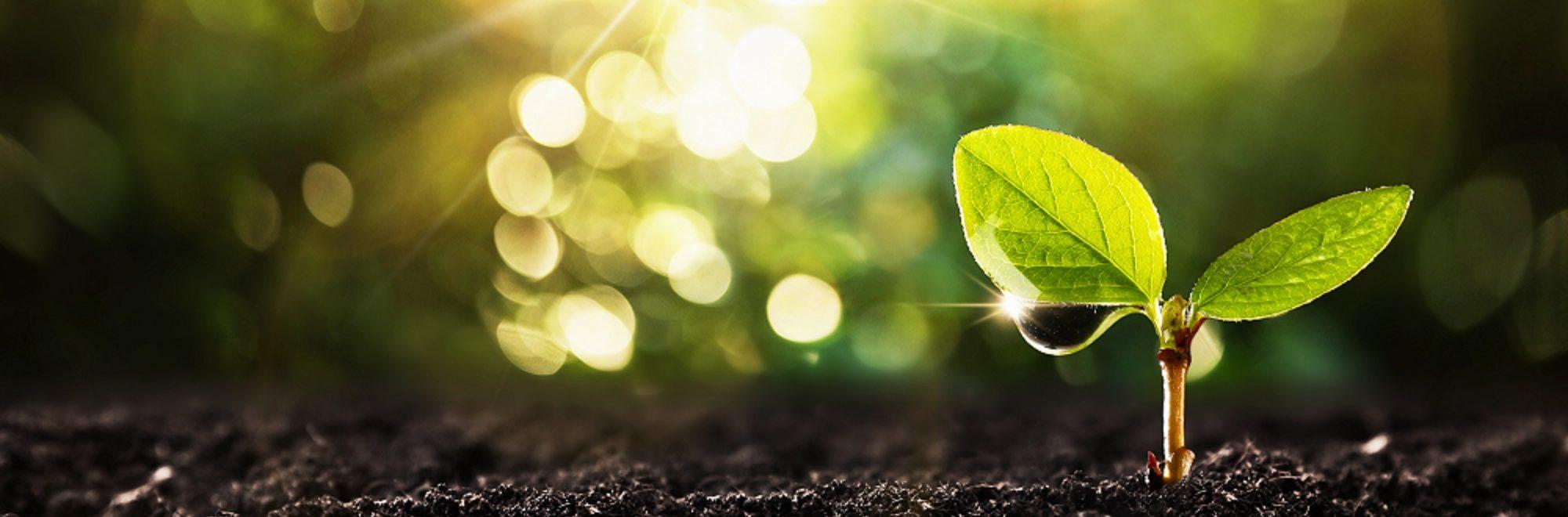 Kleine Pflanze im Licht