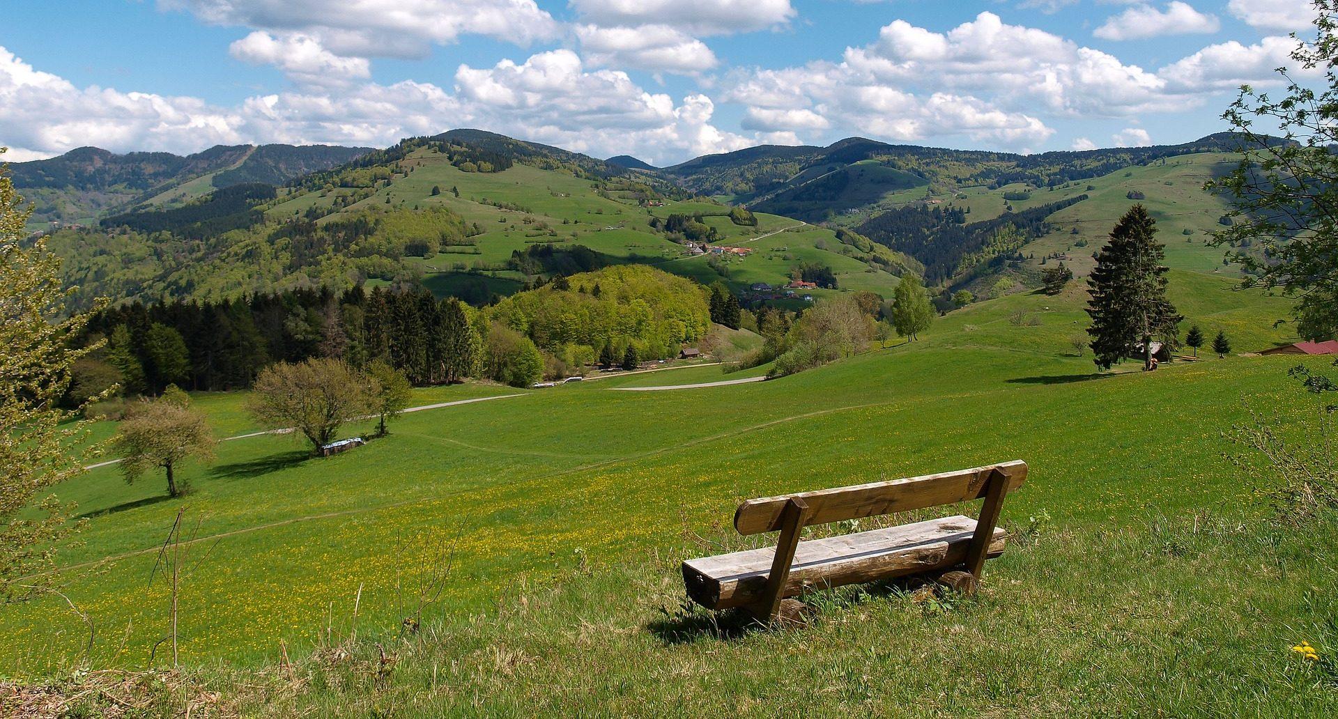 Ein Bamk in der nördlichen Schwarzwald