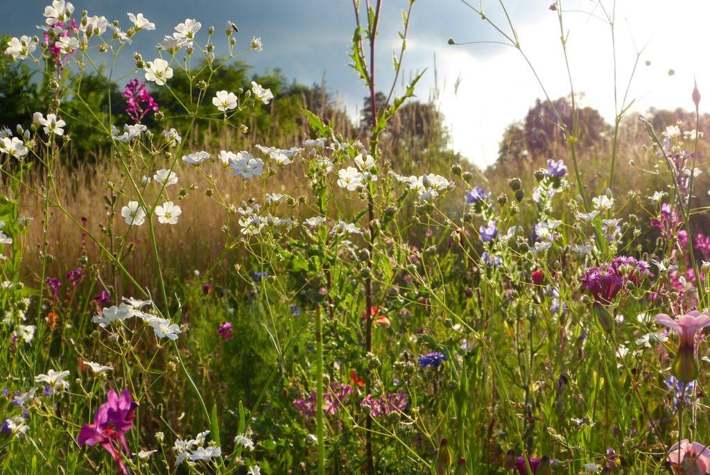 Eine bunte Blumenwiese im Sonnenschein