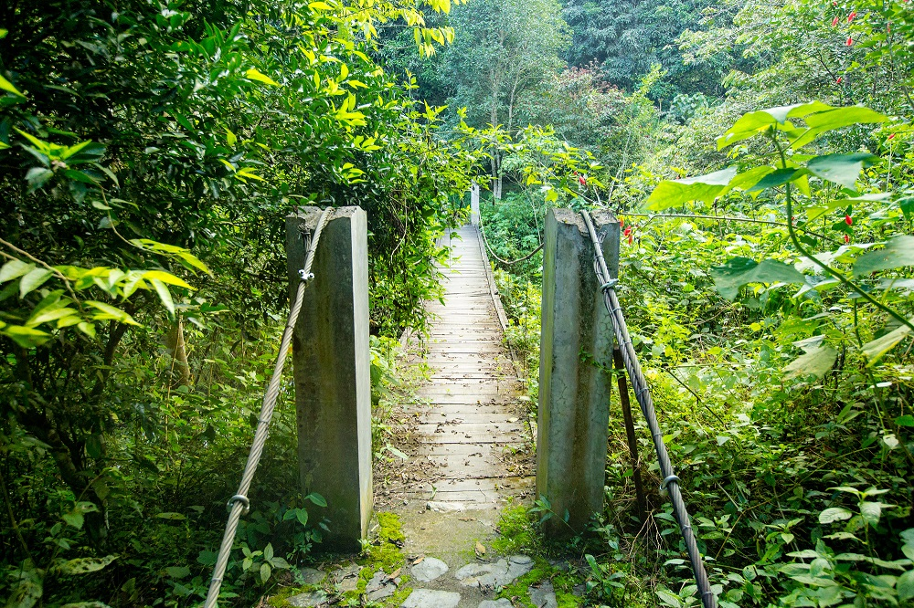 Brücke im Dschungel in Südamerika