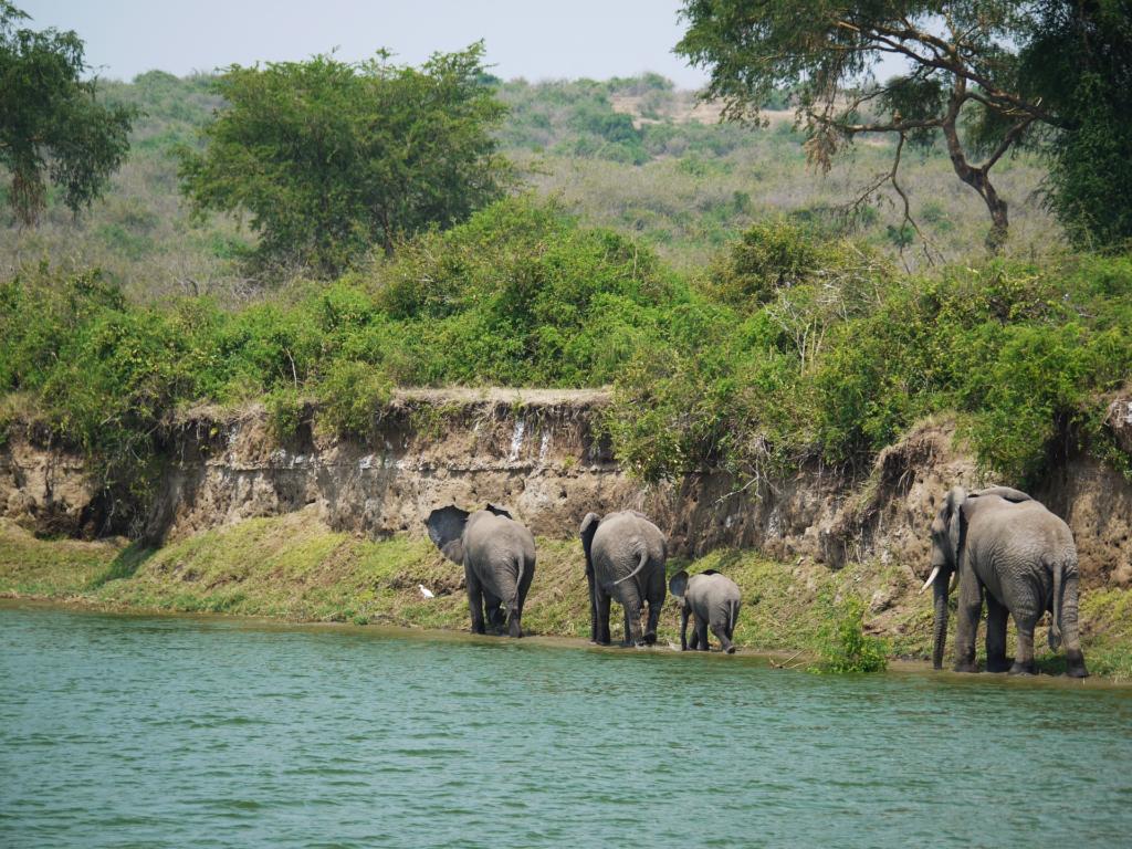 Elefanten laufen entlang eines Flusses in Afrika
