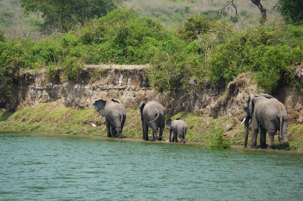 Gruppe Elefanten von hinten läuft am Fluss
