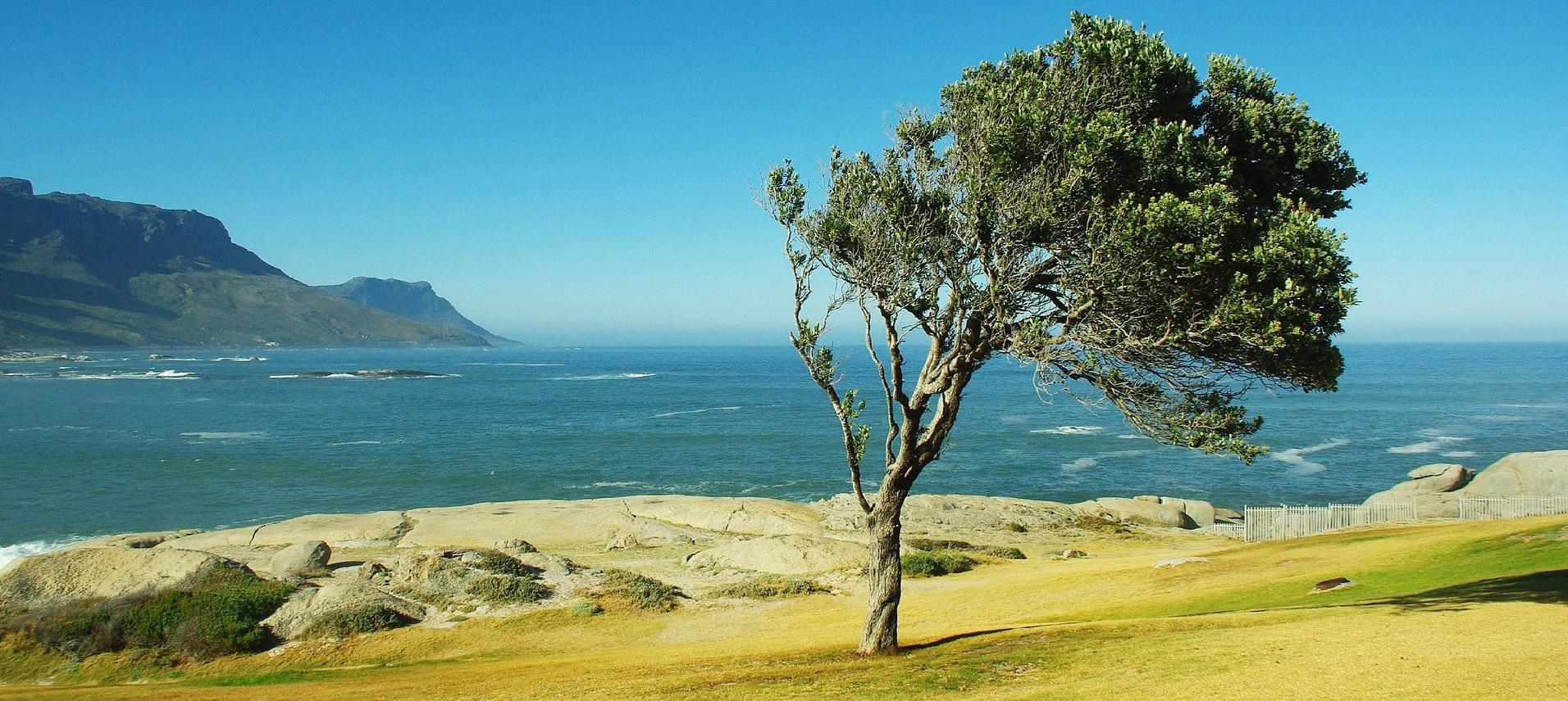 Baum im Wind in der Sonne
