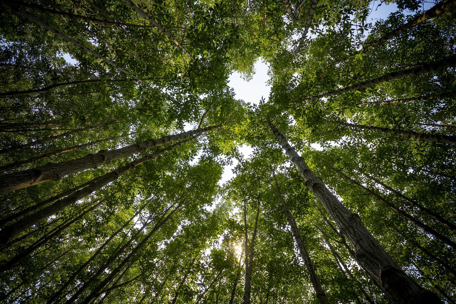 Baumkronen lassen eine herzförmige Lücke entstehen