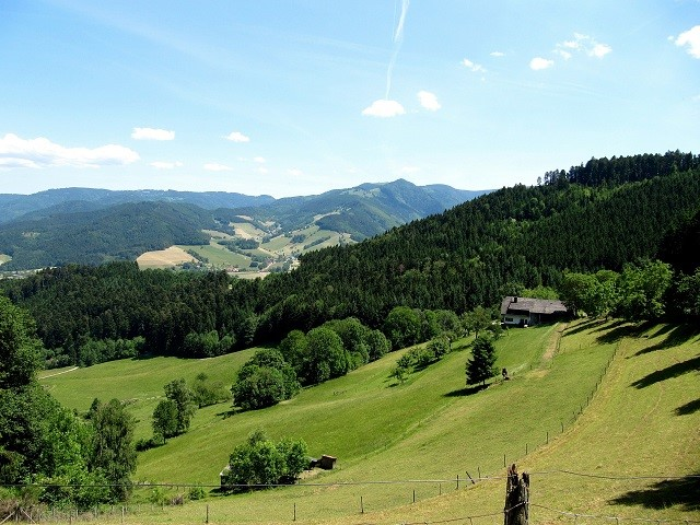 Meadow with trees in the Black Forest