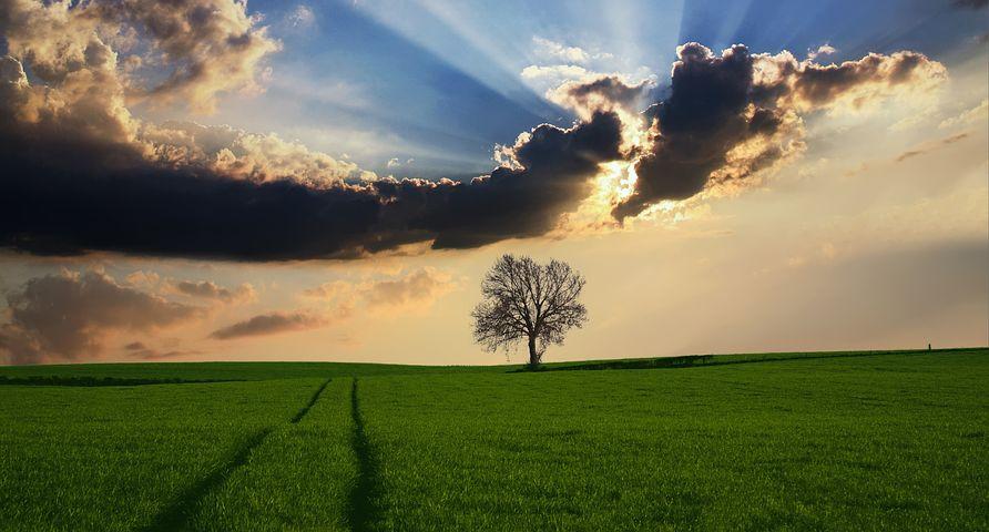 Landschaftsbild mit Baum und Wolken