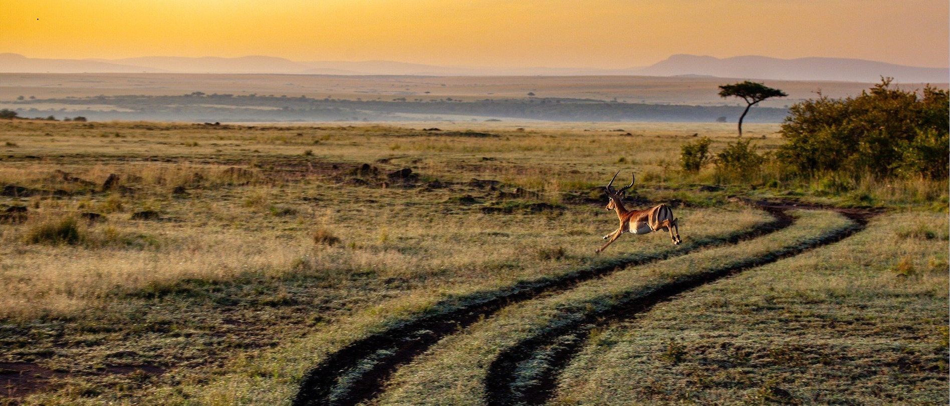 Antilope rennt durch Landschaft in Afrika