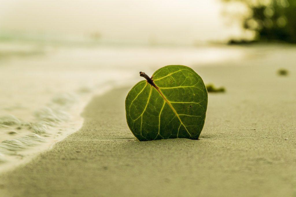 Una hoja tendida en la playa