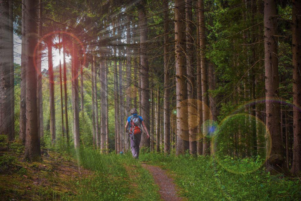 Wanderer der durch einen Wald läuft bei Sonnenlicht
