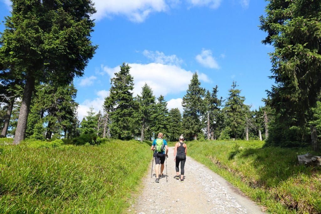Wanderer die durch den Wald laufen