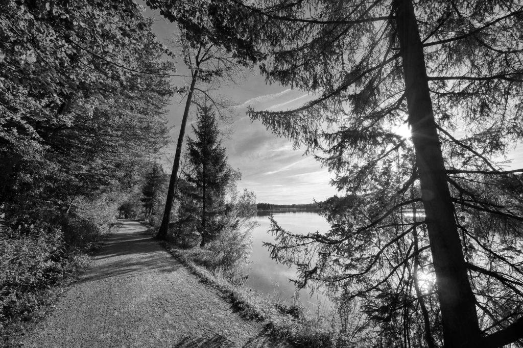 Ein Waldweg am See entlang bei Sonnenschein in Schwarz-Weiß.
