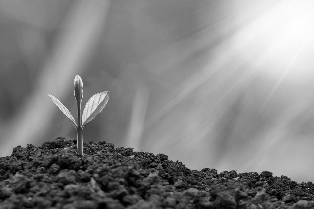 Una nueva flor que crece de la tierra con la luz del sol (blanco y negro)