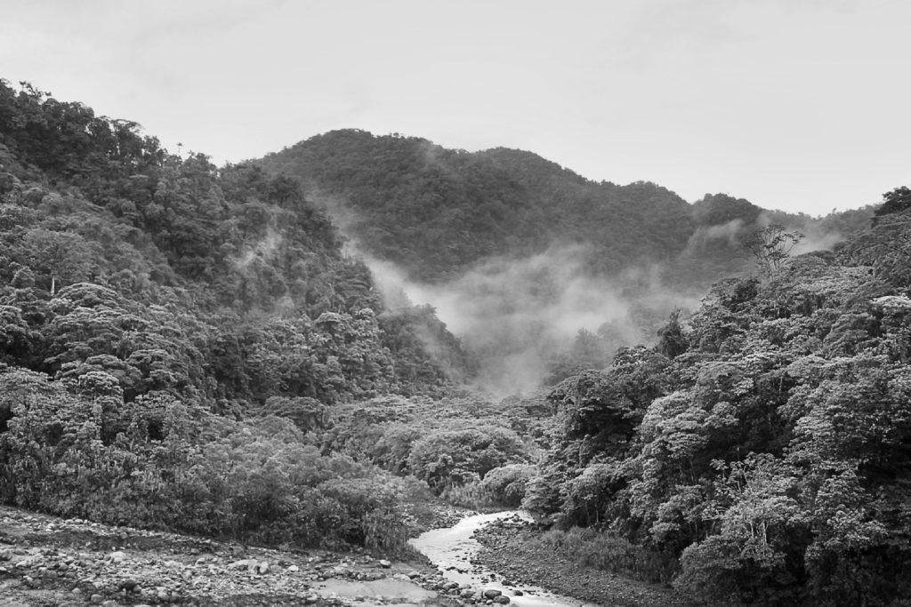Paisaje selvático con bosque, montañas y un río (blanco y negro)