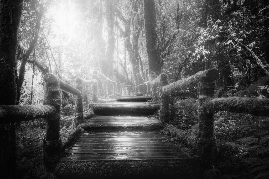 Camino de madera cubierto de musgo a través de la selva con luz solar (blanco y negro)