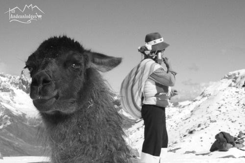 Una llama y una mujer con las montañas nevadas de fondo (blanco y negro)